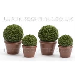 Bloom'its Miniature Garden Boxwood Planter Set